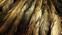 Sprayed gold on feather texture
