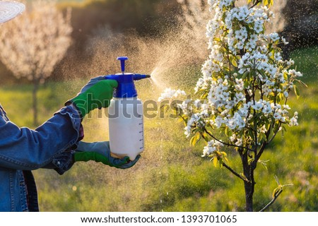 Spraying fruit tree by pesticide. hands wearing protective gloves using crop sprayer in blooming orchard. Farmer gardening at spring