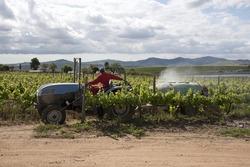 Spraying vines in the Stellenbosch region of South Africa
