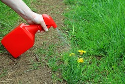 Spraying Weed Killer Onto Weeds Growing On A Mud Path Through A Wild Garden.