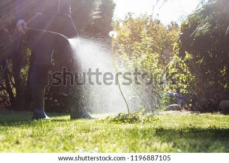 Spraying weeds in the garden #1196887105