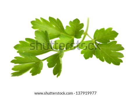 sprig of parsley isolated on white background