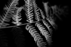 sprig of white fern on a dark background, black and white floral minimalistic background