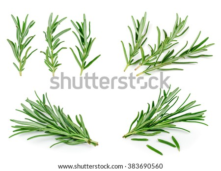 sprigs of rosemary on a white background #383690560