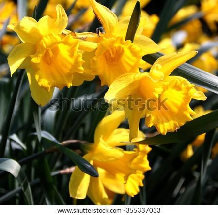 spring #355337033