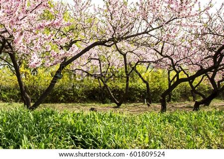 spring, #601809524