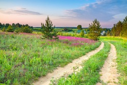 spring amazing landscape with a blossoming meadow, road and farm. summer  wild flowers on field.  purple flowers on meadow and  sunset.  flowering field wildflowers and farmhouse on sunrise.