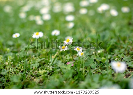 Spring and nature background concept #1179289525