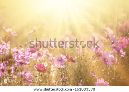 spring background #161083598