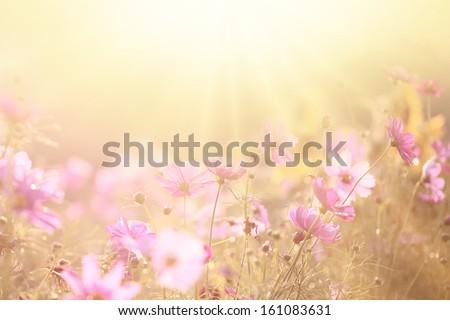 spring background #161083631