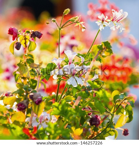 spring background, bright blur colors