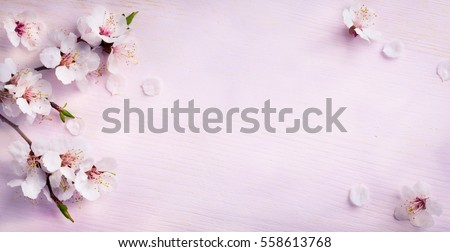 Photo of spring background; fresh flower on blue background.