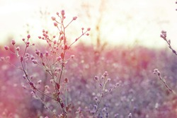 spring background, grass flower field at sunset with filters effect use as wallpaper