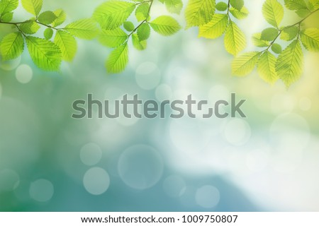 spring background  green tree...