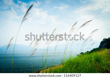 spring background - long grasses along the coast near the sea