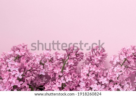 spring background mock up pink color, lilac flowers, place for text Stock photo ©