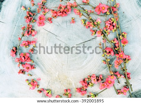 spring background, spring flowers