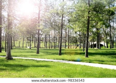 Spring background, trees, park, green grass