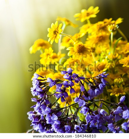Spring background with beautiful yellow flowers, sunshine