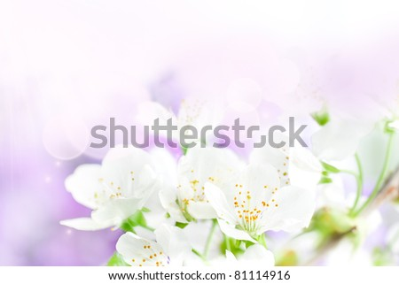 Spring background with cherry flowers and beautiful purple bokeh lights
