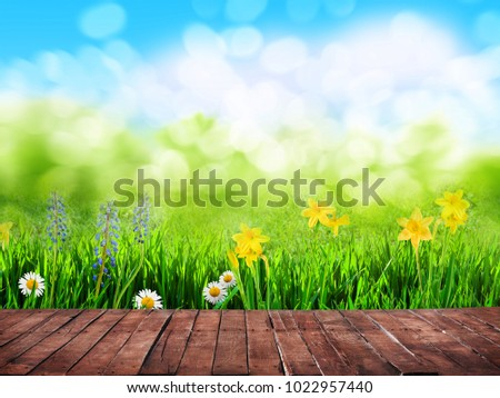 spring background with flowers and wooden floor