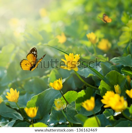 Spring background with yellow flowers and butterfly