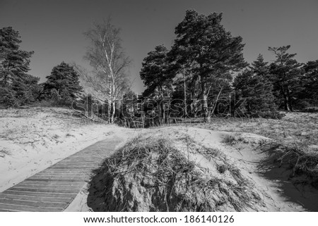spring beach, black and white photography