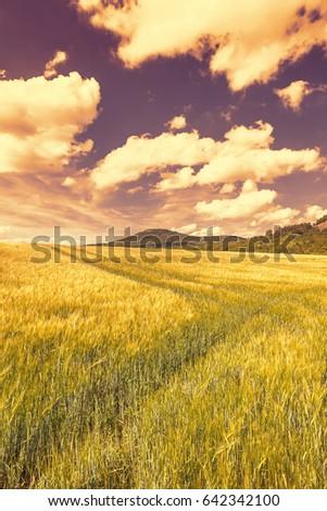 Spring beautiful landscape at sunset #642342100