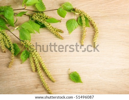 Spring Birch over wooden background - stock photo
