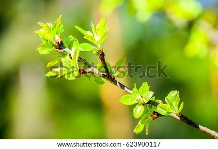 Spring bloom branch #623900117