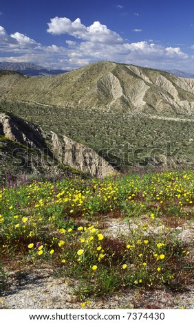 Spring bloom in a desert of Southern California
