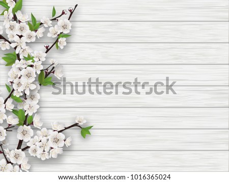 Spring blooming cherry branch on white old wood background. Realistic illustration.