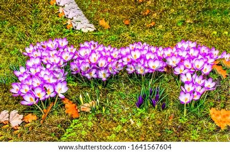 Spring blooming flowers top view. Purple white flowers view. Spring bloom flowers. Flowers in spring blooming