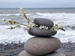 Spring blooming sakura cherry flowers branch with Zen meditation relaxation concept background - balanced stones stack close up on sea beach