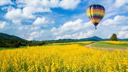 Spring blossom background. Hot air balloon over yellow flower fields against blue sky