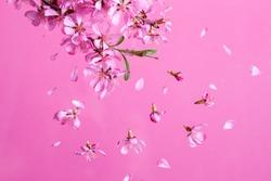 Spring blossom explosion