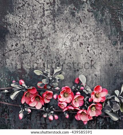 Spring Blossom flowers over dark grunge background. #439585591