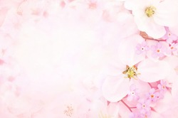 Spring blossom/springtime apple bloom, pink flowers background, pastel and soft floral card, selective focus, toned