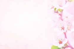 Spring blossom/springtime cherry bloom, pink flowers background, pastel and soft floral card, selective focus, toned