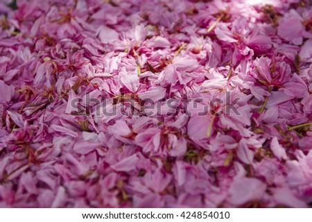 Spring blossoming bush pink flowers nature fallen leaves background spring blossoming bush pink flowers nature fallen leaves background mightylinksfo