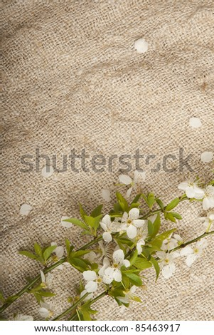 Spring blossoms on burlap background.