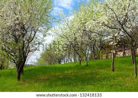 spring blossoms on old wooden surface