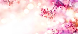 Spring border or background art with pink blossom. Beautiful nature scene with blooming tree and sun flare. Sunny day. Spring flowers. Beautiful Orchard. Abstract blurred background. Springtime