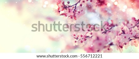 Spring border or background art with pink blossom. Beautiful nature scene with blooming tree and sun flare. Easter Sunny day. Spring flowers. Beautiful Orchard Abstract blurred background. Springtime. #556712221