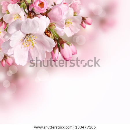 stock photo spring border or background with pink blossom 130479185 - Каталог — Фотообои «Цветы»