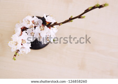 spring bouquet of blooming apricot top view