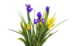 spring bouquet with tulips and iris isolated on white background