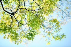 Spring branch with leaves against blue sky