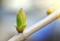 Spring bud. Composition of nature.