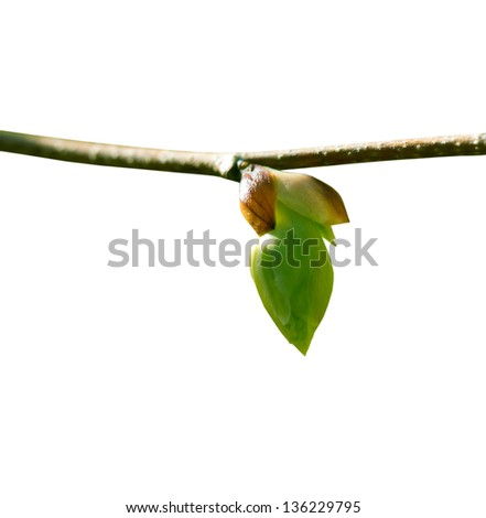Spring bud on a white background #136229795
